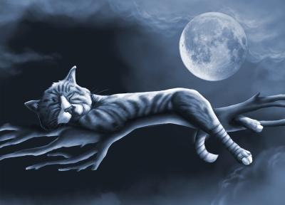 Slapende Kat in Maanlicht