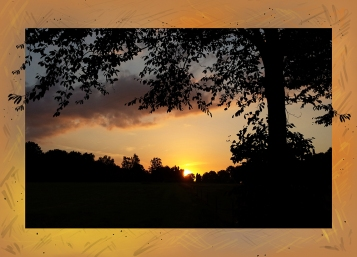 Zonsondergang in Bos